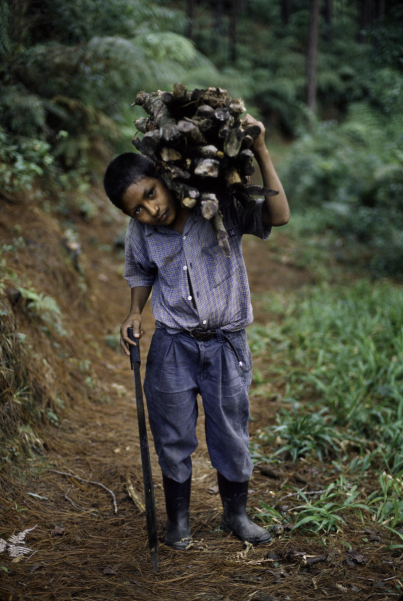 01844_12, Lavazza, Honduras, 2005, HONDURAS-10044NF3. A boy carrying sticks.  retouched_Ekaterina Savtsova 09/05/2014